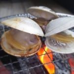 ホンビノス貝の砂抜き〜保存まで!【漁師編】食べ方のレシピはコレ!